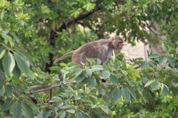 Уничтожение африканских лесов грозит человечеству новыми вирусами