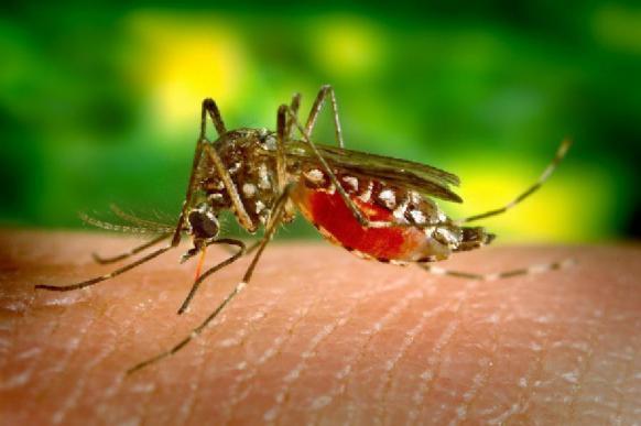 Установлено, как комары находят цель для укуса