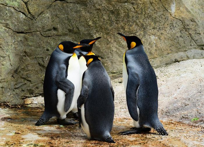 На затонувшем восьмом континенте жили предки всех пингвинов