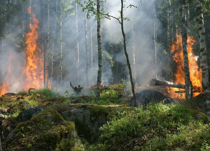 Дым от пожаров влияет на дыхательную и сердечно-сосудистую системы