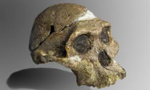 Австралийские исследователи опровергли миф о появлении древнего разума