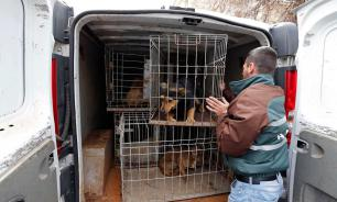 Правительство России запретило умерщвлять бездомных животных