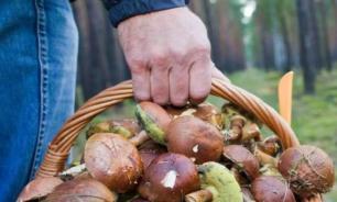 Правда и домыслы об отравлениях грибами