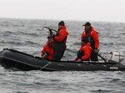 Путин помог ученым в эксперименте с китами