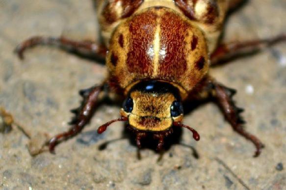 В Красноярске впервые сделали операцию таракану