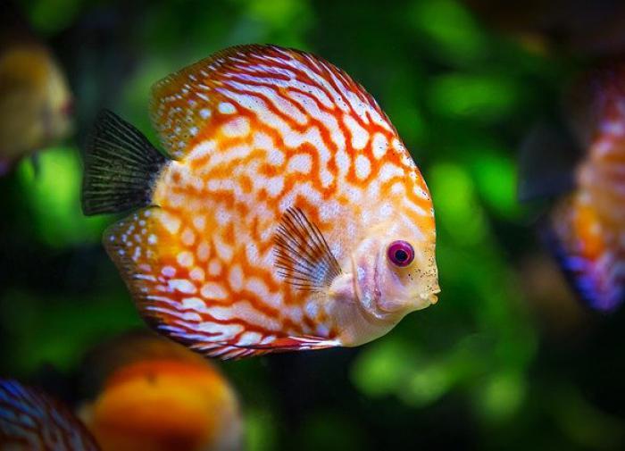К 2100 году почти 60% видов рыб на Земле могут исчезнуть