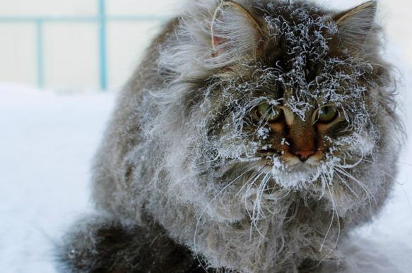 Гидрометцентр: 40-градусные морозы идут на Россию