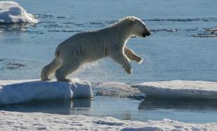 Экологи: Арктика может остаться без рыбы