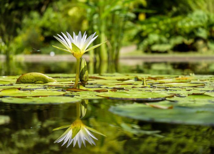 Земные озёра стремительно теряют кислород