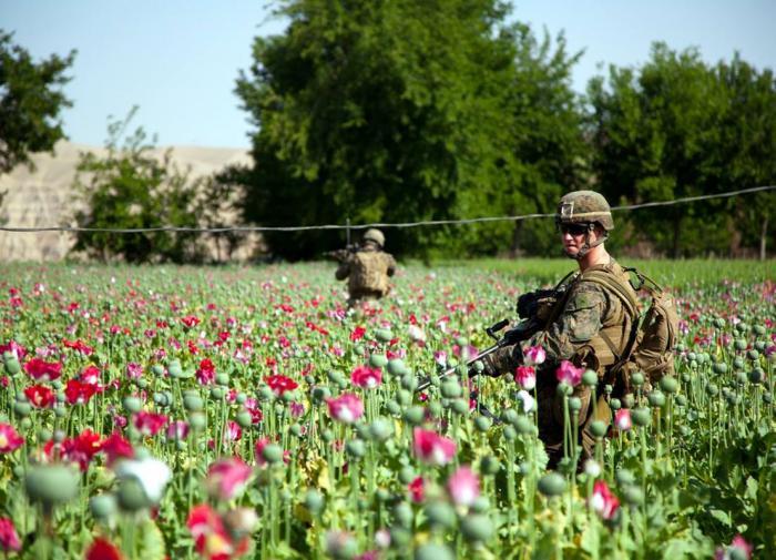 Опиумные войны стали мировым бизнесом