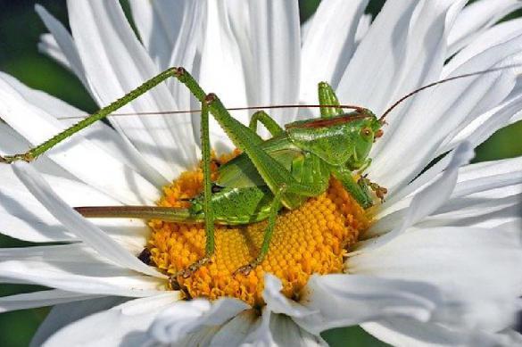 Диетолог пояснила, почему русские не могут питаться насекомыми