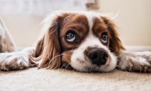 Кинолог назвал цветы и домашние растения, которые убивают собак