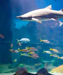 Аквариум для акулы