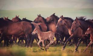 В Казахстане молния убила 70 лошадей