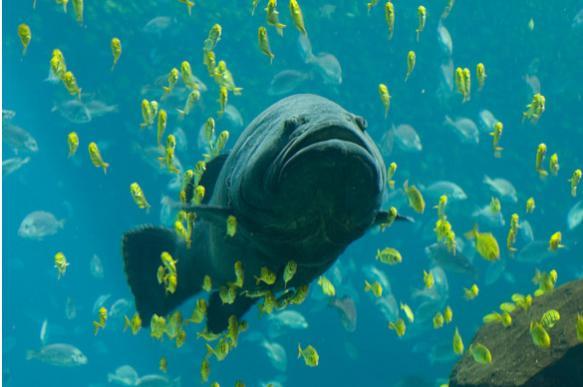 В Австралии макрель плавником порезала шею рыбачке