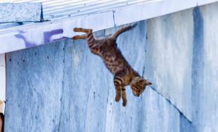 Мифы о животных, которые стоят вам денег