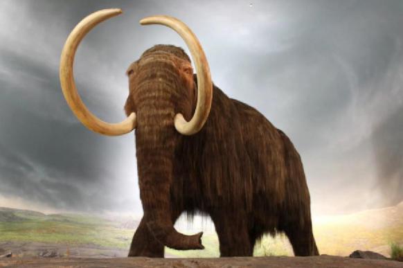 Ученые определили причину вымирания мамонтов