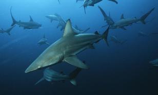 Из Енисея вытащили акулу
