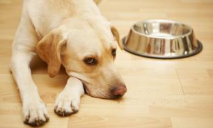 Анорексия у собак