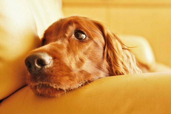 Что делать, если собаке скучно