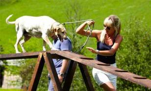 Следует ли посещать собачьи площадки?