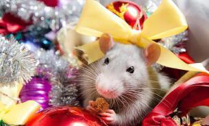 Чем крыса этого года отличается от крысы-2008