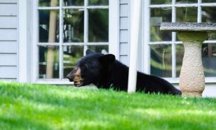 На юге Сахалина медведь подошёл к школе