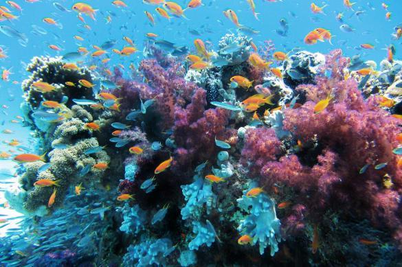 Неоновое свечение защищает обесцвеченные кораллы