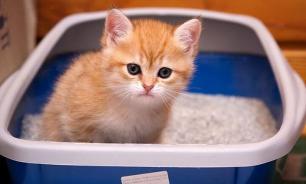 Приучаем котенка к лотку: простые советы
