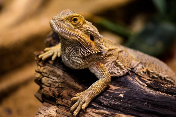 Древние люди употребляли в пищу змей и ящериц