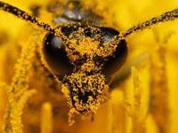 Растревоженные пчелы до смерти искусали рабочего.