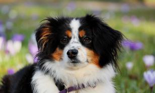 Как быстро найти потерявшуюся собаку, объяснил кинолог