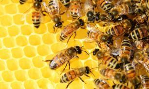Эксперты выяснили, как пчелы помогают снизить артериальное давление