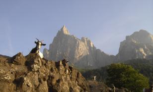 В Альпах обнаружили мумию козы: животное погибло 400 лет назад