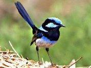 Птицы дают яйцам уроки вокала