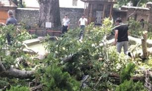 Упавшая в Азербайджане ветка 500-летнего дерева ранила двух россиян