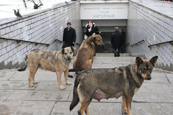 Бродячие псы искусали ребенка: в Ачинске возбуждено уголовное дело.