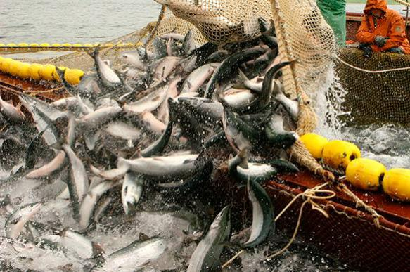 Категорически запрещена промышленная ловля при отсутствии лицензии.