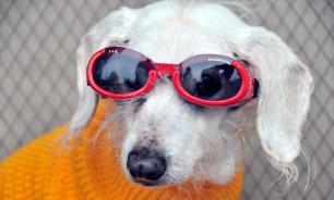 Ученые рассказали, как собаки относятся к своим хозяевам