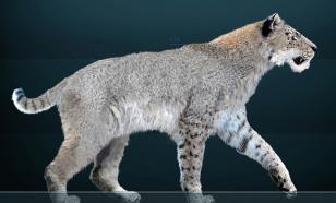 Вымершим саблезубым кошкам-гомотериям провели анализ ДНК