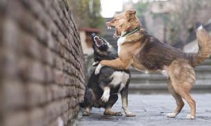 Кинолог: проблема бродячих собак решаема