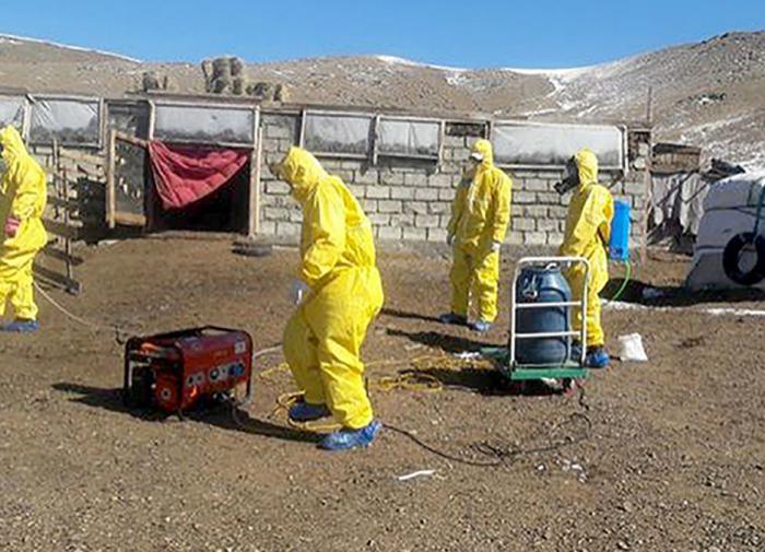 В Китае объявлен третий уровень опасности из-за бубонной чумы