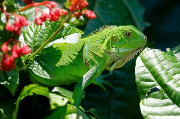 Рептилии тоже могут видеть иллюзии - исследование