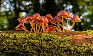 Специалисты предложили строить саморазрастающиеся здания из грибов