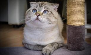 Поведение кошек: секреты и методы воспитания