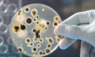 Ученые в растерянности: опасные бактерии выработали иммунитет к антибиотикам