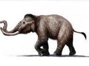 Почему мамонт стал лысым карликом