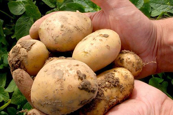 Частое употребление картофеля может вызвать диабет - исследование
