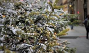 В Омске продают елки с опасными жуками