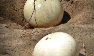 Археологи выяснили, как в бронзовом веке украшали страусиные яйца